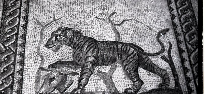 78-19-037 Taranto Museum, panel from large mosaic with tiger and horse
